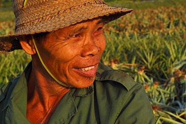 Pineapple farmer, Xu Wen, Guangdong province, China