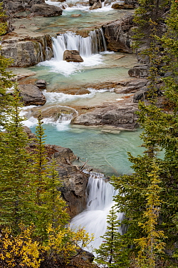 Waterfalls along Nigel Creek, flowing through coniferous forest. Jasper National Park, Alberta, Canada. September 2018.