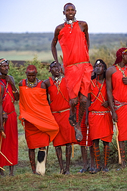 Maasai moran / warrior jumping during traditional ceremony, others observing in background. Maasai Mara National Reserve, Kenya. 2007.