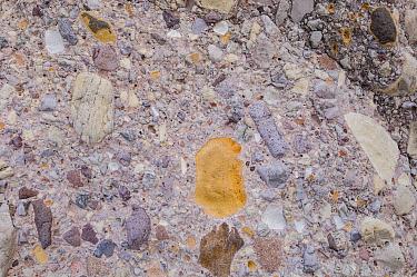 Conglomerate rock. Arroyo de San Pablo, Sierra de San Francisco, El Vizcaino Biosphere Reserve, Baja California, Mexico.