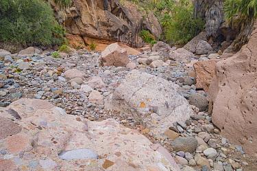 Conglomerate rock on floor of canyon. Arroyo de San Pablo, Sierra de San Francisco, El Vizcaino Biosphere Reserve, Baja California, Mexico.