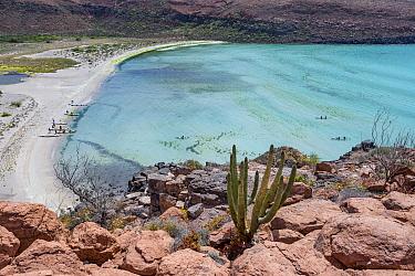 Cacti (Cactaceae) growing amongst rocks, view to kayakers in cove. Espiritu Santo Island, Baja California Sur, Mexico. 2013.
