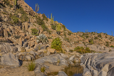 Freshwater pool in Sonoran Desert, close to location of cave paintings. Near Catavina, Valle de los Cirios Reserve, Baja California, Mexico. 2013.