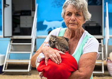 Wildlife rescuer and carer Lorna King leaves the mobile wildlife triage centre at Bairnsdale holding here male koala (Phascolarctos cinereus) named River'. River was brought in for a health check duri...