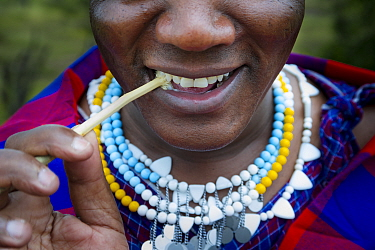 Masaai woman using traditional stick to clean her teeth. Ngorongoro Conservation Area, Serengeti National Park, Tanzania. March 2014.