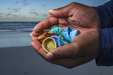 Plastic litter of bottle tops and fishing line held in hands of litter picker, washed up on beach. The Bahamas. 2020.