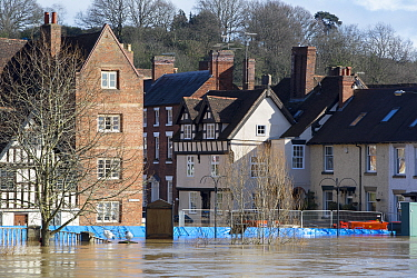 River Severn floodwaters in town of Bewdley. The river overtopped the flood barriers following Storm Ciara and Storm Dennis, the wettest February recorded in the UK. Worcestershire, England, UK. Febru...