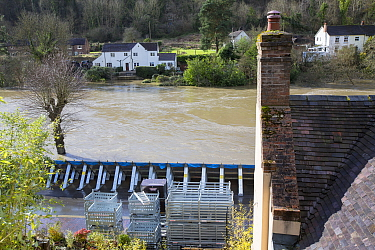 Environment Agency flood defences alongside River Severn in flood conditions. After Storm Ciara and Storm Dennis, the wettest February recorded in the UK. Ironbridge, Shropshire, England, UK. February...