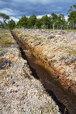 Ditch through peat bog, used to drain land. Seno Obstruccion, Patagonia, Chile. January 2020.