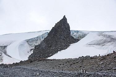 Gentoo penguin (Pygoscelis papua) breeding colony on rocks below glacier. Fort Point, Greenwich Island, South Shetland Islands, Antarctica. January 2020.