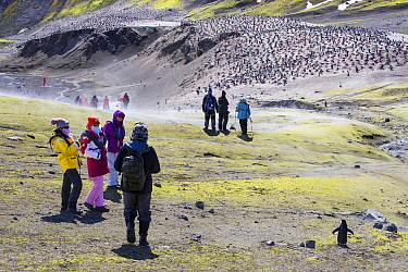 Tourists from expedition cruise ship amongst Chinstrap penguin (Pygoscelis antarcticus) colony. Breeding bird numbers have rapidly declined from 100,000 to 20,000 in the past thirty years. Baily Head,...