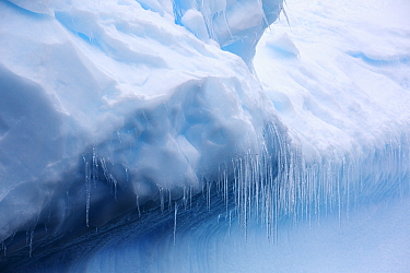 Icicles hanging off an iceberg in Southern Ocean. One of the most rapidly warming areas on the planet. Spert Island, Palmer Archipelago, Antarctica. December 2019.