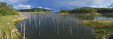 Tree trunks remaining from drowned forest after damming of Barron River to create Lake Tinaroo, aerial view. One of Queenland's major stores of irrigation water. Atherton Tablelands, Australia. 20...