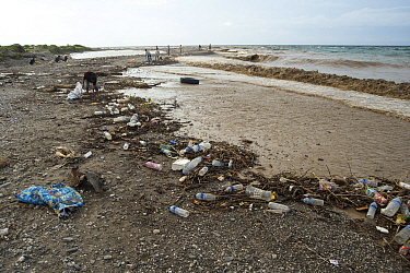 Plastic bottles amongst single use plastics washed up on beach, group of people litter picking the shoreline. East Timor. 2018.