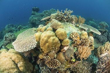 Coral reef, Atauro Island, East Timor.