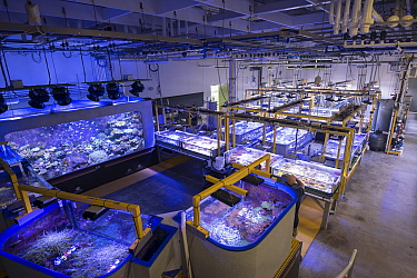 Tanks with Great Barrier Reef experiments at National Sea Simulator. Australian Institute of Marine Science where impacts of complex environmental changes are researched, Cape Ferguson, Queensland, Au...