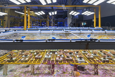 Coral and Fish native to Great Barrier Reef inside experiment tanks at National Sea Simulator. Australian Institute of Marine Science where impacts of complex environmental changes are researched, Cap...