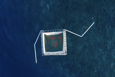 Harrison Integrated Spawn Catcher Rearer Inflatable Pool over Great Barrier Reef, aerial view. Coral spawn caught with arms during synchronised spawning event and held in pool. Larvae reared alongside...