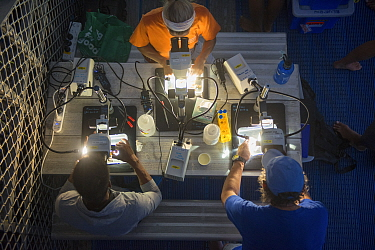 Scientists and researchers from Coral IVF project led by Southern Cross University looking down microscopes at night. Researchers scraping out reared Coral growing on settlement tiles before they can...