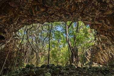 Lava tubes, view out of cave towards forest. Undara Volcanic National Park, Undara is an Aboriginal word translating to 'long way'. Queensland, Australia. 2017.