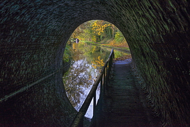 Llangollen Canal emerging from tunnel number 57 under A528 road in autumn south of Ellesmere Shropshire, England, UK, November 2019.
