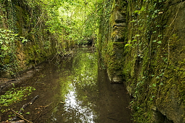 Derelict lock on Thames and Severn Canal, abandoned in the 1930's, near Sapperton, Gloucestershire, UK, June 2020.