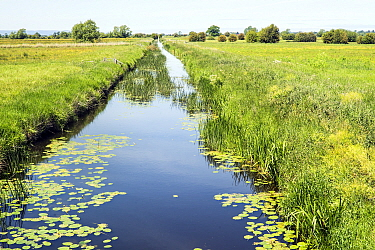 Drainage channel,stretching to the horizon on the flat, damp pastures of the low-lying, flood prone Somerset Levels, Somerset, UK, May 2020.