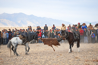 Buzkashi, Mongolian tug of war, with a goat skin. Men on horseback with crowd watching in background. Eagle Hunters Festival, Bayan-Olgii, Altai Mountains, Western Mongolia. October 2008.