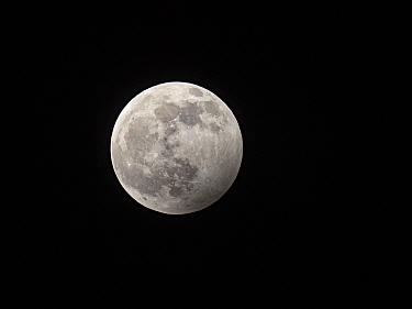 Full moon on clear night. Holy, North Norfolk, England, UK. November.
