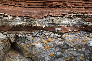 Conglomerate rock at unconformity between Carboniferous limestone and Triassic sandstone. Sully, South Glamorgan, Wales, UK. September 2018.