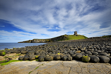 Dunstanburgh Castle on headland of the Whin Sill, eroded dolerite boulders in foreground. Northumberland, England, UK. July 2019.