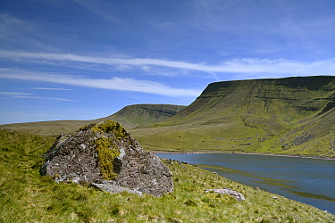 Rock of Devonian fluvial sandstone and conglomerate beside Llyn y Fan Fach, peaks of Picws Du and Fan Brycheiniog sandstone escarpment above. Near Llandovery, Brecon Beacons National Park, Wales, UK....