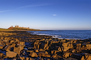 Beach with blocks of columnar basalt of the Whin Sill, Dunstanburgh Castle on headland in background. Craster, Northumberland, UK. December 2019.