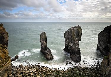 Elegug Stacks, formed by coastal erosion of carboniferous limestone. Bosherston, Pembrokeshire Coast National Park, Wales, UK. September 2018.