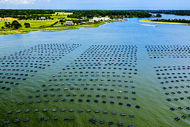 Cherrystone Aqua-Farms Clam and Oyster farm, aerial view. Cape Charles, Virginia, USA. May 2019.