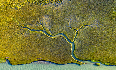 Aerial view of tidal channels in marshland, with tree like appearance. Mockhorn Island State Wildlife Management Area, Virginia, USA. May 2019.