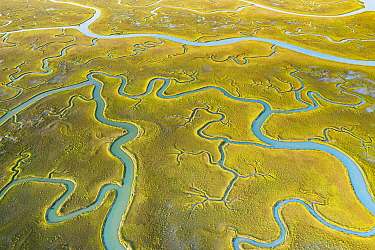 Aerial view of tidal channels in marshland. Mockhorn Island State Wildlife Management Area, Virginia, USA. May 2019.