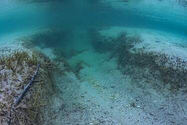 Propeller scar on sea floor, damage to the root structure of Seagrass can lead to erosion of Seagrass bed. Eleuthera, Bahamas.