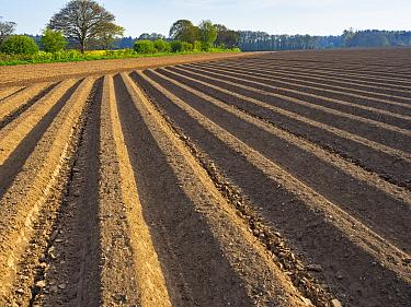 Newly planted potato field at Southrepps, Norfolk, England, UK, April.