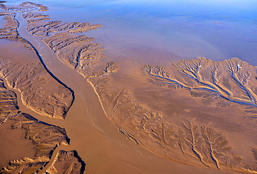 Aerial view of patterns in tidal mudflats of Colorado River Delta where there is tidal encroachment from the Gulf of California. Baja California, Mexico, 2019.