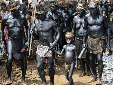 Papuan people covered in black body paint weating tradional dress. At Sing-sing gathering where traditional cultures including dance and music are shared. Morobe Show, Lae, Papua New Guinea. 2019.