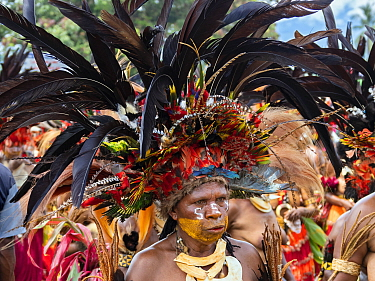 Papuan with painted face and headdress participating in Sing-sing gathering where traditional cultures including dance and music are shared. Morobe Show, Lae, Papua New Guinea. 2019.