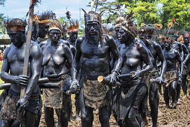 Papuan people covered in black body paint participating in Sing-sing gathering to share traditional culture including dance and music. Morobe Show, Lae, Morobe Province, Papua New Guinea. 2019.