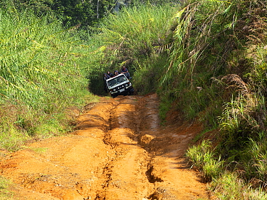 Jeep on rutted dirt road through montane rainforest. Eastern Highlands, Papua New Guinea. 2019.
