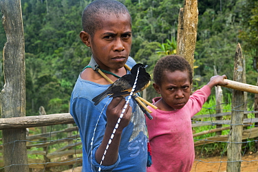 Papuan boys with King of Saxony bird of paradise (Pteridophora alberti), killed with slingshot. Eastern Highlands, Papua New Guinea. 2019.