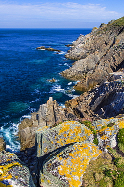 Cliffs of Lundy Island, Devon, England, United Kingdom. British Isles, June.