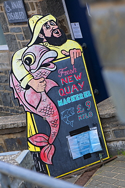 Fresh fish sign advertising mackerel (Scomber scombrus). New Quay, Ceredigion, Wales, United Kingdom. British Isles.