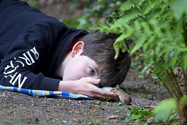 Boy feeding wild Wood mouse (Apodemus sylvaticus). Norwich, Norfolk, England, UK. May 2020. Model released.