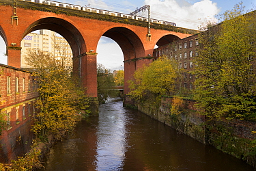 Railway bridge over River Mersey. Stockport, Greater Manchester, England, UK. November 2019.