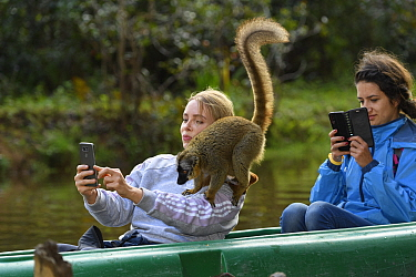 Tourist taking selfie of captive Common brown lemur (Eulemur fulvus) on her shoulder. Lemur Island, Andasibe, Madagascar. 2019.